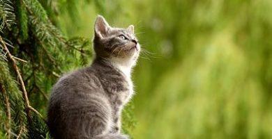 Nombres para gatos_opt