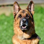Nombres de perros famosos-opt
